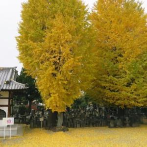 真冬の寒さの中で正幸寺の境内を埋め尽くす黄金色の公孫樹の落ち葉を眺め、煮込みおでんで温まりました。