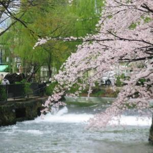 前橋の街の桜が散り始めて、広瀬川の遊歩道は花びらが散り敷いています。春は往きますが、非常事態宣言はどうなるのかな、いろんな情報が錯綜して…