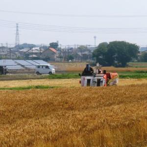 久しぶりにクロスバイクで茂木町のPeche Mignonまで一走り、午後はJAファーマーズ朝日町店で真竹をゲット!