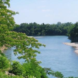 前橋刑務所から利根川沿いに下川町まで、暑かったけどチャリで運動してたら、銀梅花の枝をいただきました