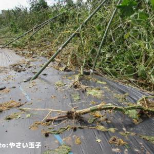 台風被害と蜂蜜