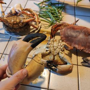 フランスの田舎では魚介類パーティ