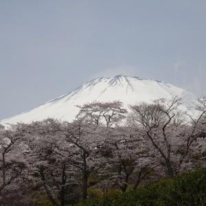 富士霊園に行ってみた。