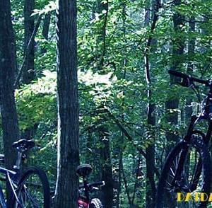 MTBで森林浴トレッキング
