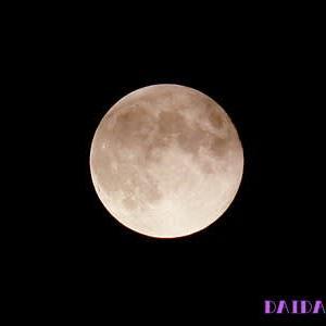 月の兎も野苺が好き!?