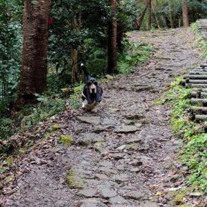 クーパー大嵐山へ行こう!