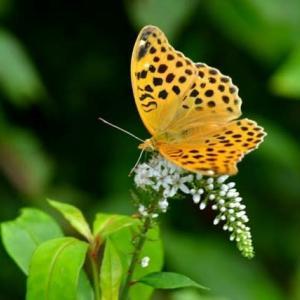 高原蝶の乱舞は天国のよう