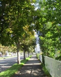 栃の木並木