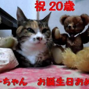 ハッピーは元気に二十歳・長寿猫さんの仲間入りです♪