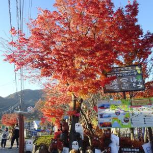河口湖へ紅葉を愛でに。