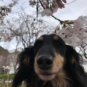 桜よりこっち。