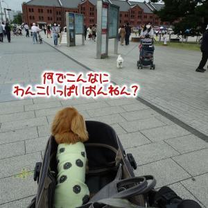 久しぶりに横浜に行ってきた。