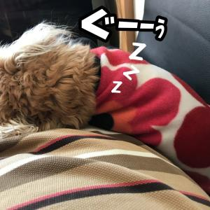 静電気犬。