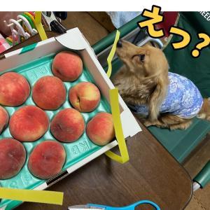 桃よオマエもか。