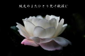 10月 銀座フォト句会作品