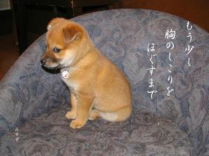 愛犬『ちゃちゃ』