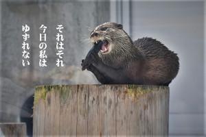 10月・12月の銀座フォト句会