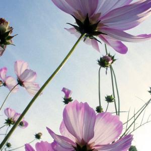 9月の運気は【乙】草花