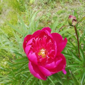 北海道 初夏の花々 君の名は?