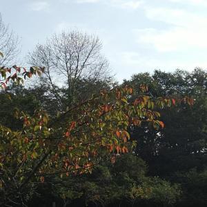 秋の植物 ハギ と オギ