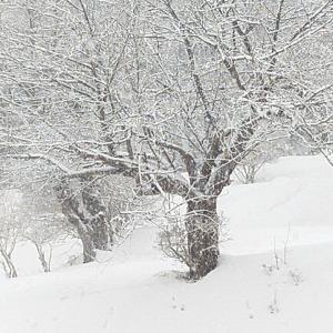 雪国転倒 4日め