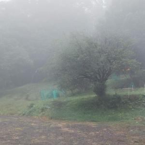 霧からスタートし、霧へ戻る