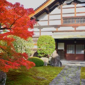 京の紅葉2019⑥