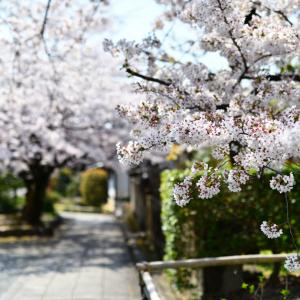 桜廻り②〜十二坊