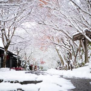 雪の大原  雪紅葉