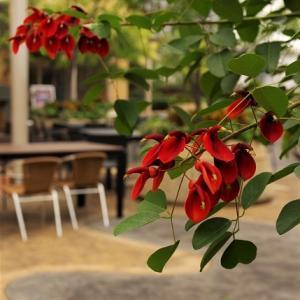 Floral snap 1