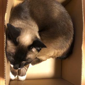 いい箱ありました。