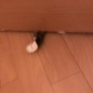 ドアの下から