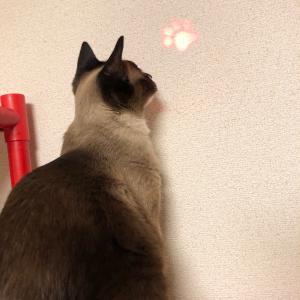 ペット用 LED ライト ポインター 肉球