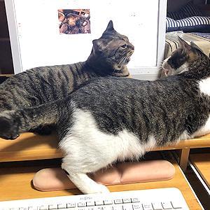 猫まみれな日々「ゆずがキレた!」