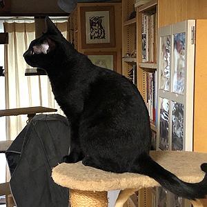 猫まみれな日々「さくら vs クモ」
