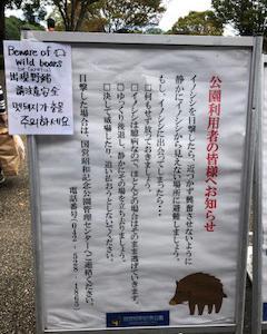 猫まみれな日々「芋煮会バーベキュー」