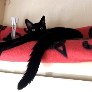 猫まみれな日々「めんこい」
