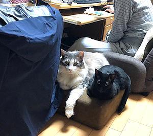 猫まみれな日々「王さまとさくら」