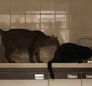 猫まみれな日々「食洗機」