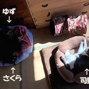 猫まみれな日々「日向ぼっこ」