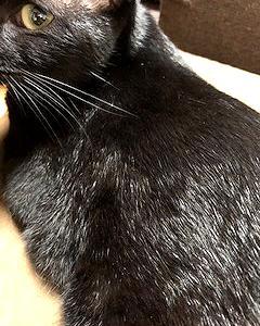 猫まみれな日々「濡れ羽色」