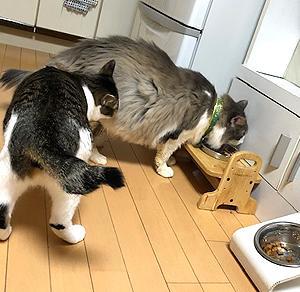 猫まみれな日々「シャンプー&カット」