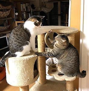 猫まみれな日々「ゆるい戦い」