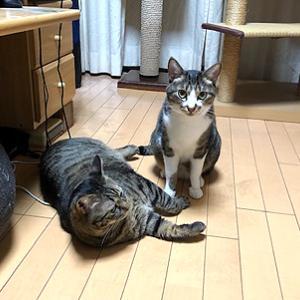 猫まみれな日々「何があった?」
