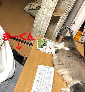猫まみれな日々「晩酌タイム」
