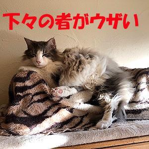 猫まみれな日々「下々の者」