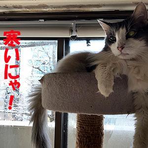 猫まみれな日々「雪の日」
