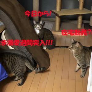 猫まみれな日々「在宅勤務」