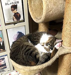 猫まみれな日々「寝てる?」