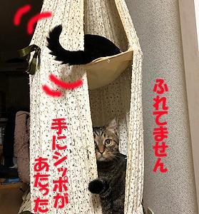 猫まみれな日々「もめる」